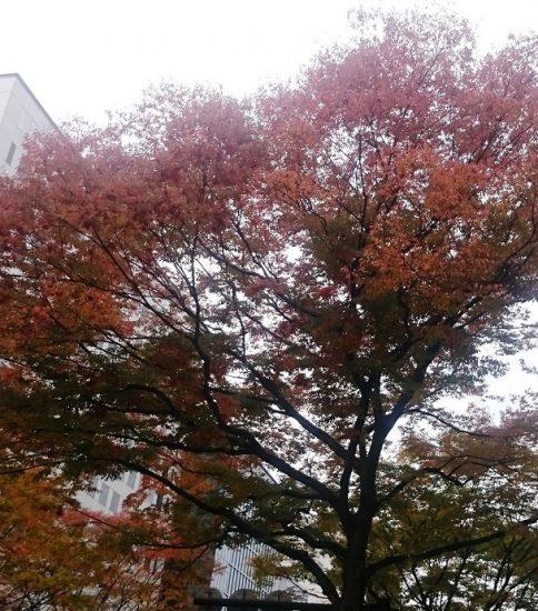 秋も深まりました